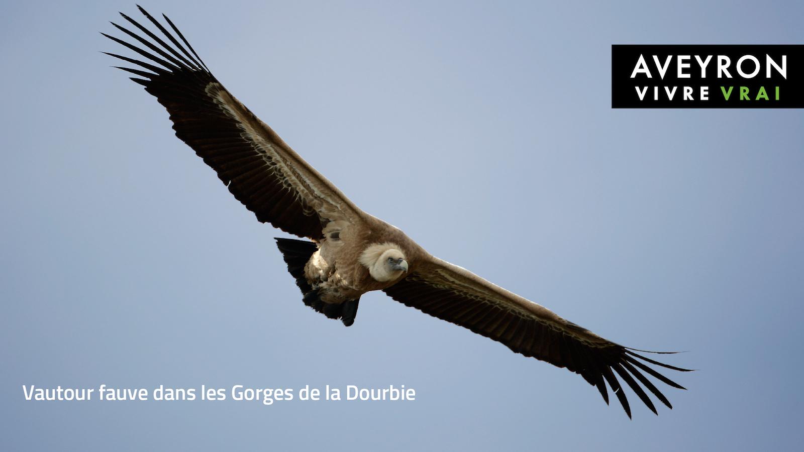 Pradinas Aveyron Occitanie le Muret